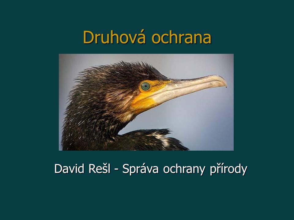 Druhová ochrana David Rešl - Správa ochrany přírody