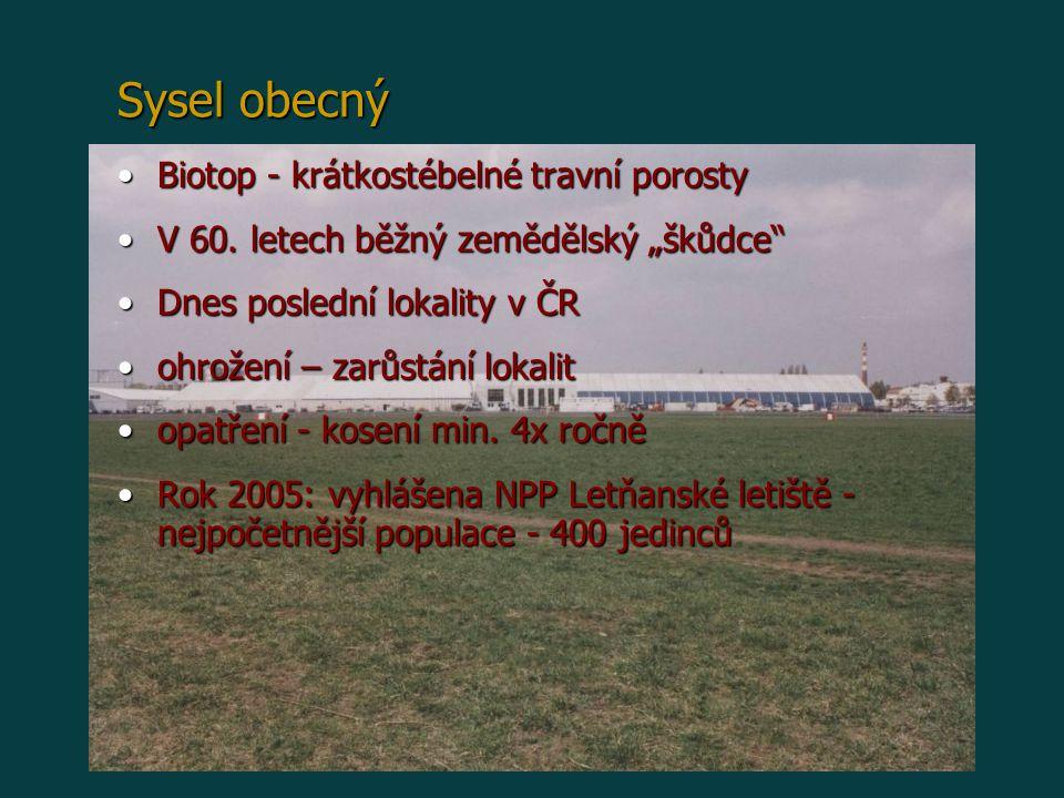 """Biotop - krátkostébelné travní porostyBiotop - krátkostébelné travní porosty V 60. letech běžný zemědělský """"škůdce""""V 60. letech běžný zemědělský """"škůd"""