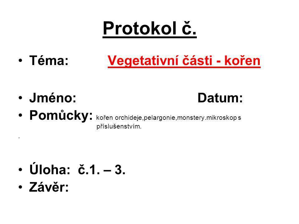 Protokol č. Téma:Vegetativní části - kořen Jméno:Datum: Pomůcky: kořen orchideje,pelargonie,monstery.mikroskop s příslušenstvím.. Úloha: č.1. – 3. Záv