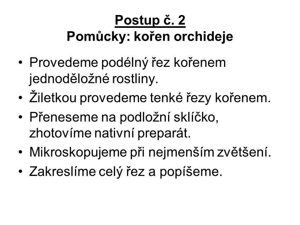 Postup č. 2 Pomůcky: kořen orchideje Provedeme podélný řez kořenem jednoděložné rostliny. Žiletkou provedeme tenké řezy kořenem. Přeneseme na podložní