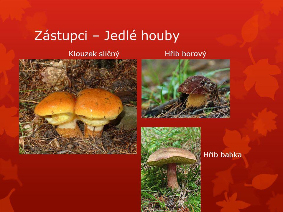 Zástupci – Jedlé houby Klouzek sličnýHřib borový Hřib babka