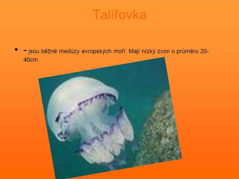 Talířovka - jsou běžné medúzy evropských moří. Mají nízký zvon o průměru 20- 40cm.