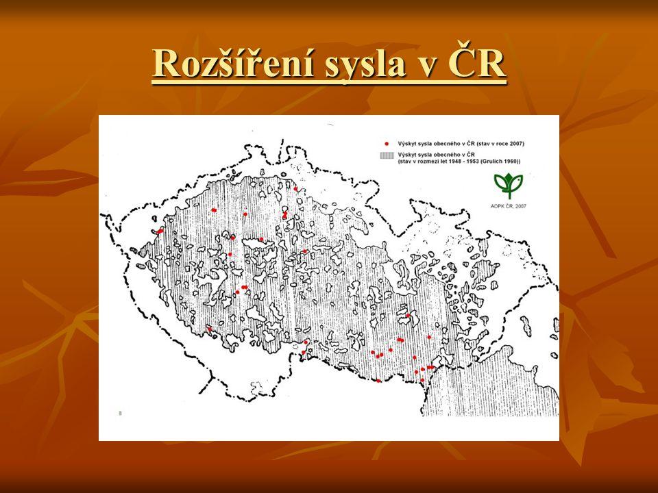 Rozšíření sysla v ČR