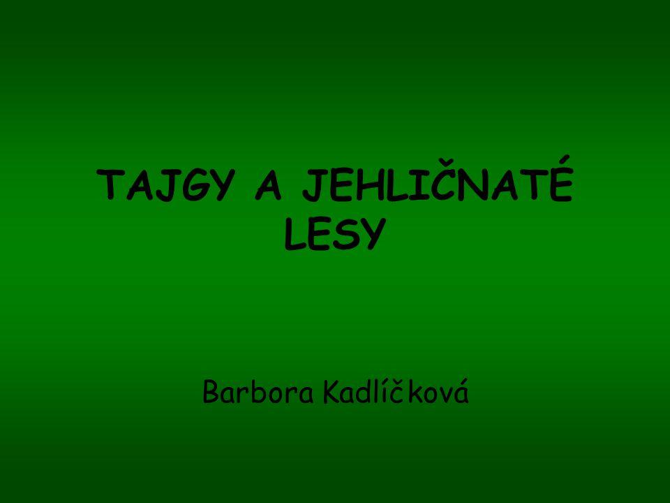 TAJGY A JEHLIČNATÉ LESY Barbora Kadlíčková