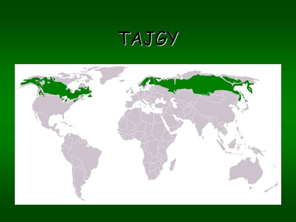¤Sibiř, Skandinávie, Aljaška, Kanada ¤v bylinném patře převládají vřesy,borůvky a brusinky ¤vytvořené silné mechové patro ¤Složení lesů záleží na oblasti: smrky=vlhké prostředí borovice=suchá místa modříny=místa s velkými výkyvy teplot (Sibiř),tvoří nejsevernější hranici ¤V přechodu mezi jehličnany a tundrou (oblast lesotundry) – velký podíl břízy (Mrazík )