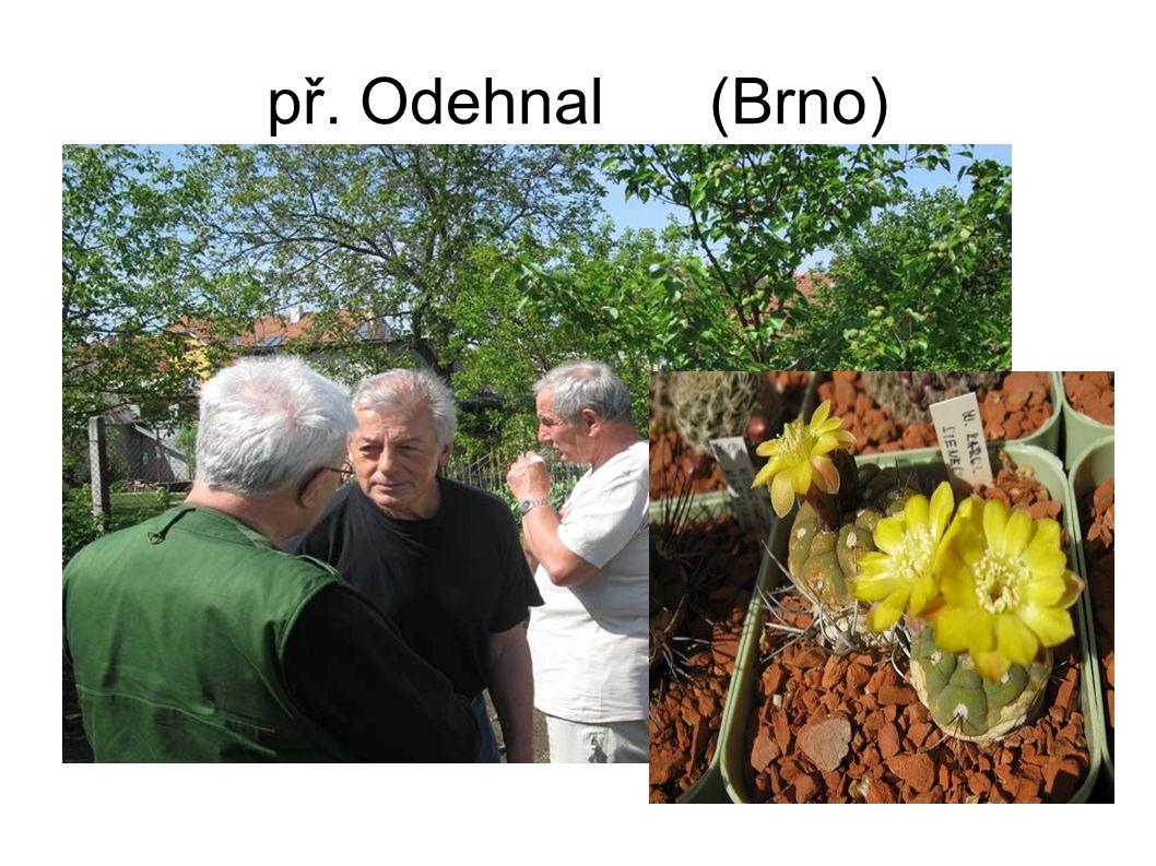 př. Odehnal (Brno)