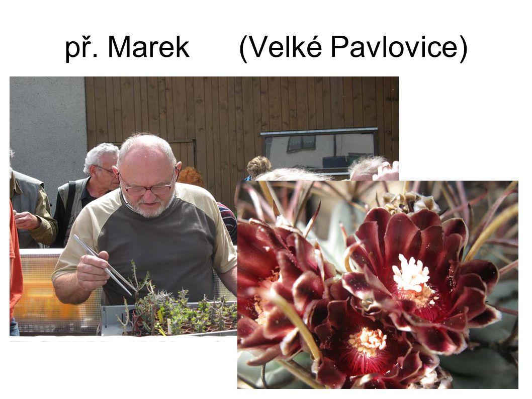 př. Marek (Velké Pavlovice)