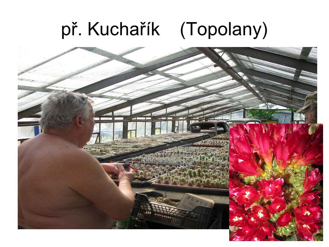 př. Kuchařík (Topolany)