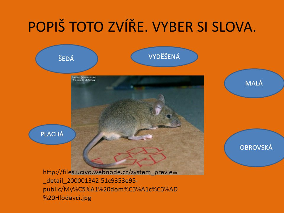 POPIŠ TOTO ZVÍŘE. VYBER SI SLOVA. http://files.ucivo.webnode.cz/system_preview _detail_200001342-51c9353e95- public/My%C5%A1%20dom%C3%A1c%C3%AD %20Hlo
