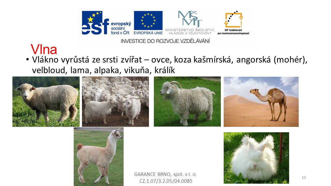 Vlna Vlákno vyrůstá ze srsti zvířat – ovce, koza kašmírská, angorská (mohér), velbloud, lama, alpaka, vikuňa, králík GARANCE BRNO, spol. s r. o. CZ.1.