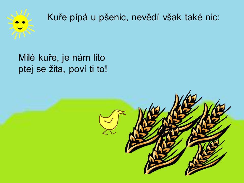 Kuře pípá u pšenic, nevědí však také nic: Milé kuře, je nám líto ptej se žita, poví ti to!