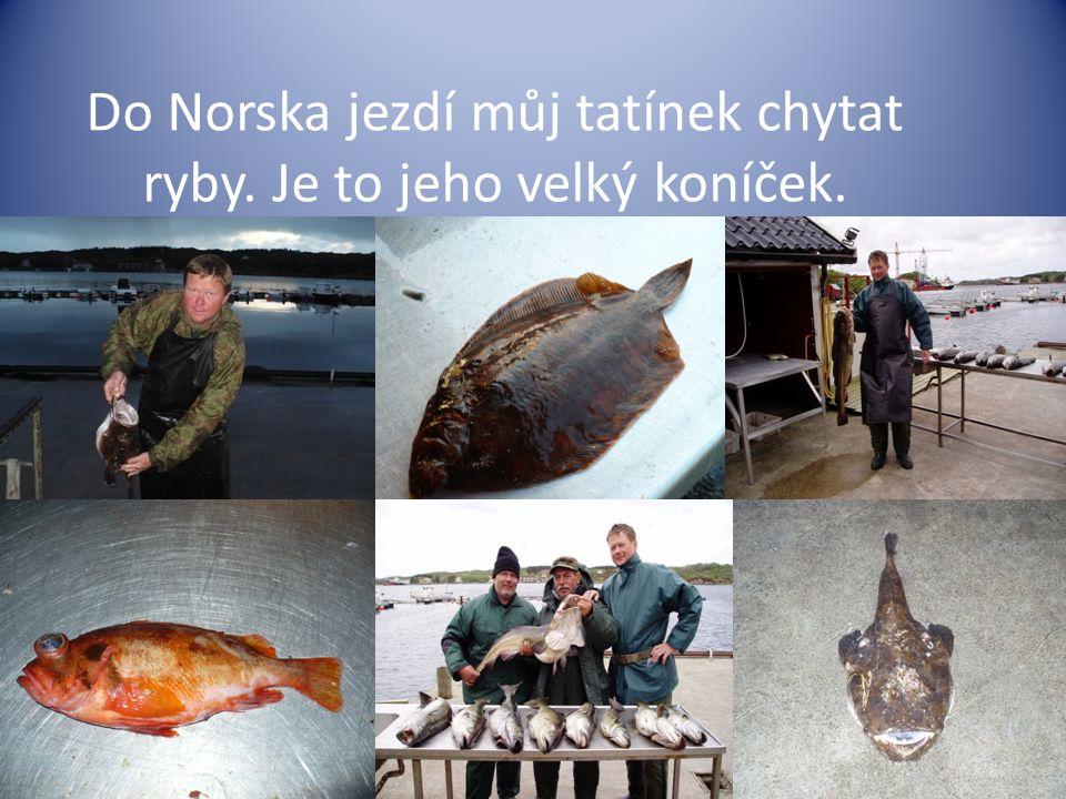 Do Norska jezdí můj tatínek chytat ryby. Je to jeho velký koníček.