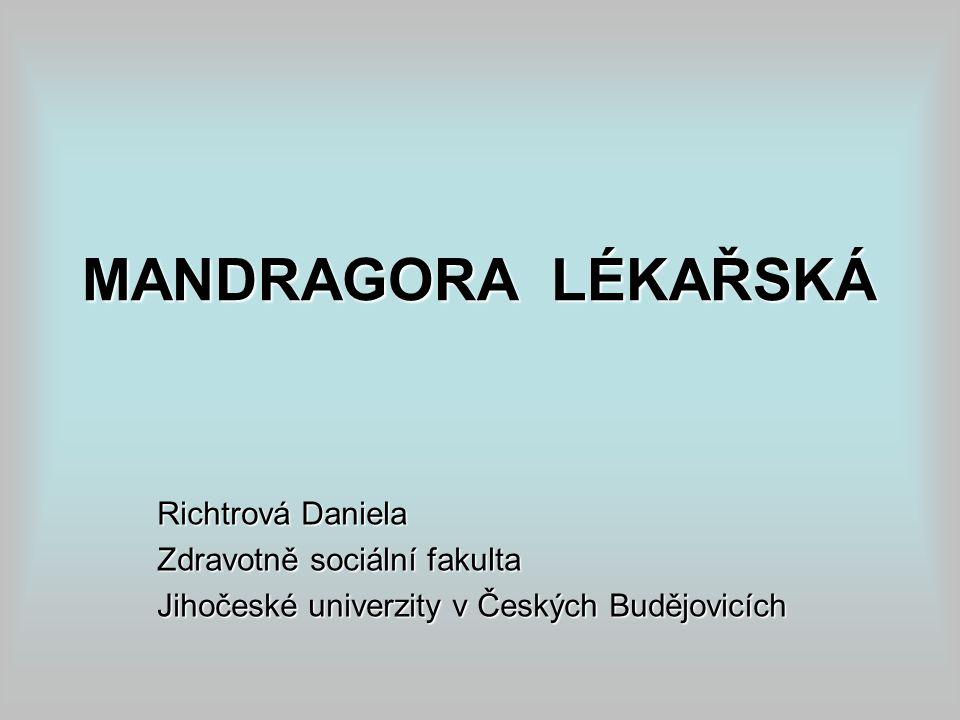 MANDRAGORA LÉKAŘSKÁ Richtrová Daniela Zdravotně sociální fakulta Jihočeské univerzity v Českých Budějovicích