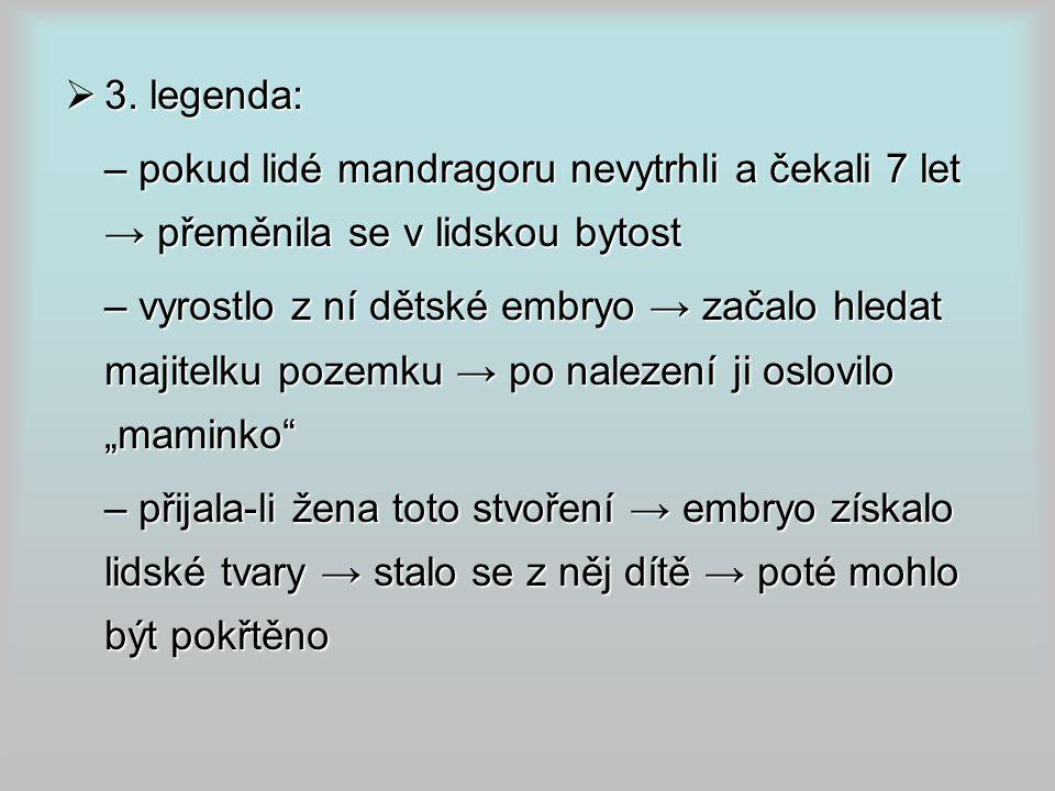  3. legenda: – pokud lidé mandragoru nevytrhli a čekali 7 let → přeměnila se v lidskou bytost – vyrostlo z ní dětské embryo → začalo hledat majitelku