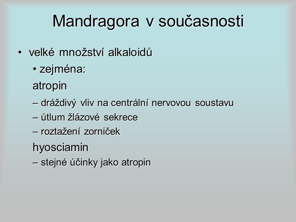 Mandragora v současnosti velké množství alkaloidůvelké množství alkaloidů zejména: zejména:atropin – dráždivý vliv na centrální nervovou soustavu – útlum žlázové sekrece – roztažení zorniček hyosciamin – stejné účinky jako atropin