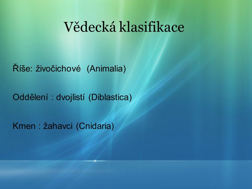 Vědecká klasifikace Říše: živočichové (Animalia) Oddělení : dvojlistí (Diblastica) Kmen : žahavci (Cnidaria)