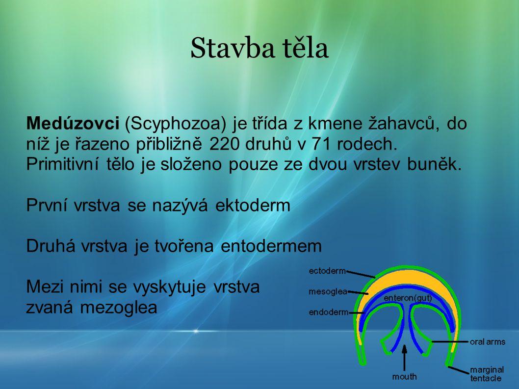 Stavba těla Medúzovci (Scyphozoa) je třída z kmene žahavců, do níž je řazeno přibližně 220 druhů v 71 rodech. Primitivní tělo je složeno pouze ze dvou