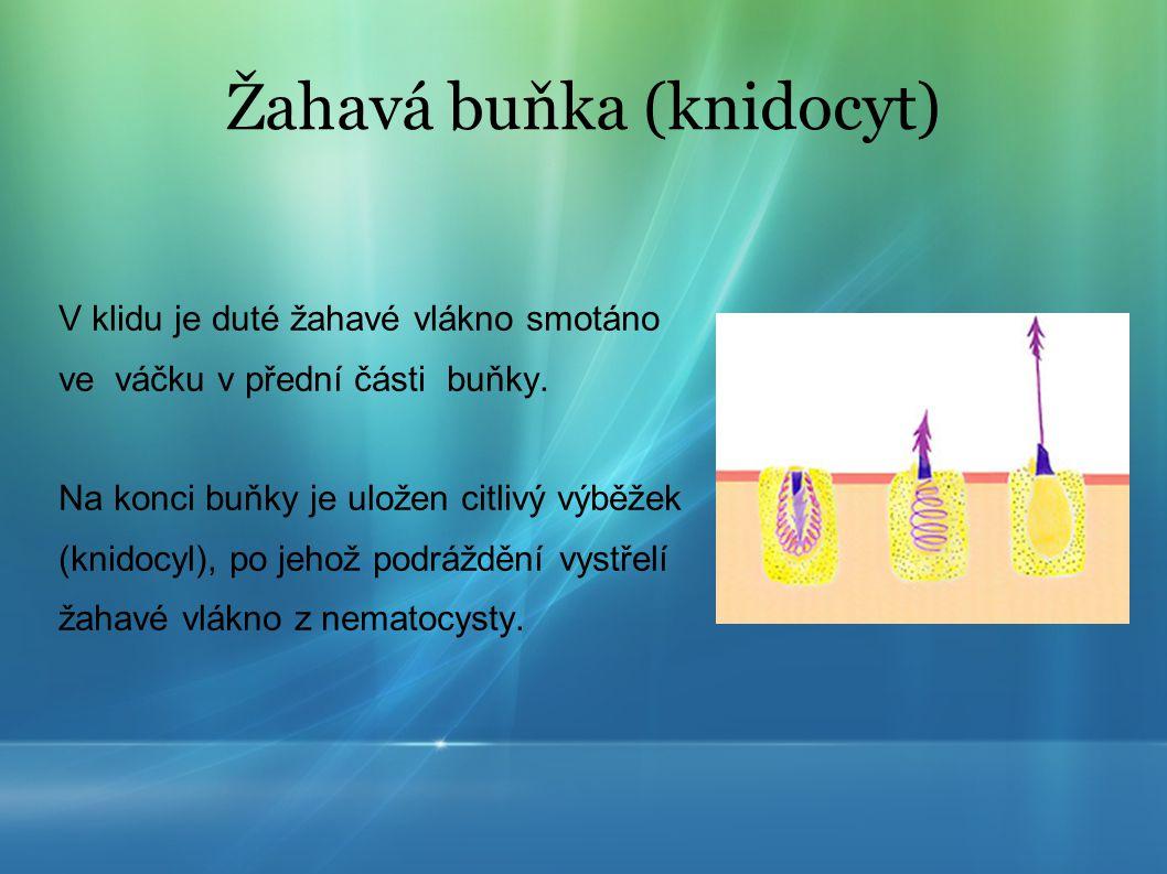 Medúza značně ovlivňuje složení oceánů, protože společně s planktonem či klanonožci jsou schopné přesunovat velké množství vody z oceánského dna směrem k hladině.