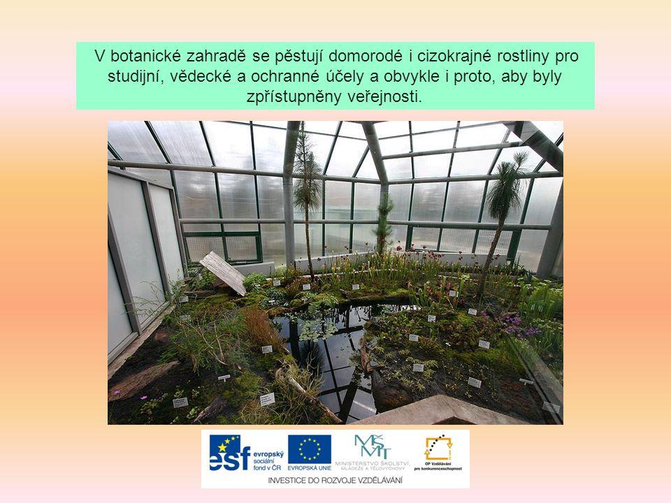 V botanické zahradě se pěstují domorodé i cizokrajné rostliny pro studijní, vědecké a ochranné účely a obvykle i proto, aby byly zpřístupněny veřejnos