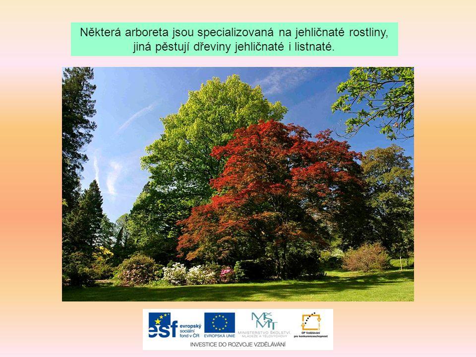 Některá arboreta jsou specializovaná na jehličnaté rostliny, jiná pěstují dřeviny jehličnaté i listnaté.