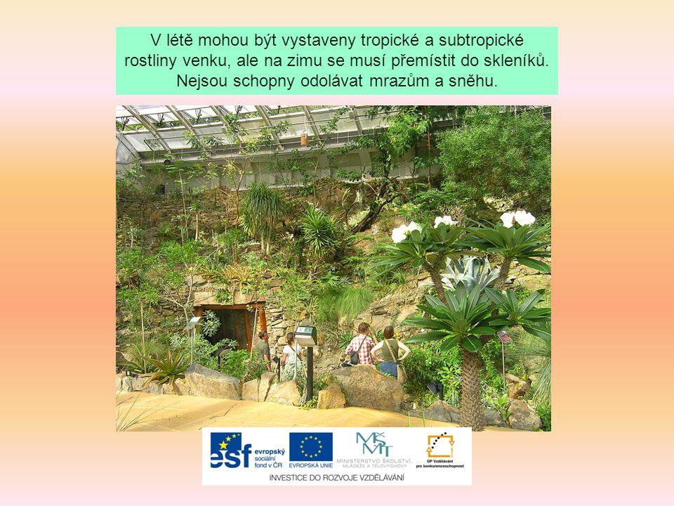 Zdroje: Soubor:Arboretum Vysoké Chvojno2.jpg.Wikipedie [online].