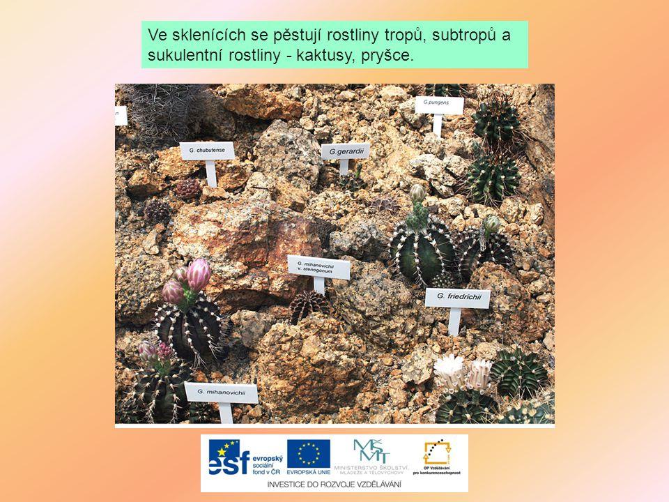 Ve sklenících se pěstují rostliny tropů, subtropů a sukulentní rostliny - kaktusy, pryšce.