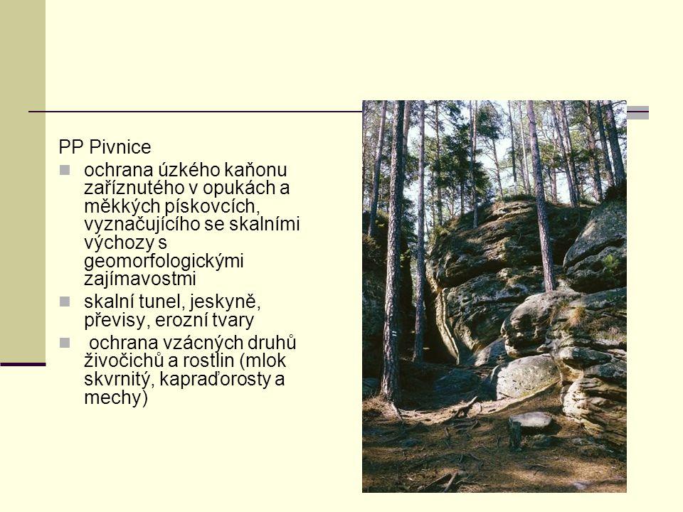 PP Pivnice ochrana úzkého kaňonu zaříznutého v opukách a měkkých pískovcích, vyznačujícího se skalními výchozy s geomorfologickými zajímavostmi skalní
