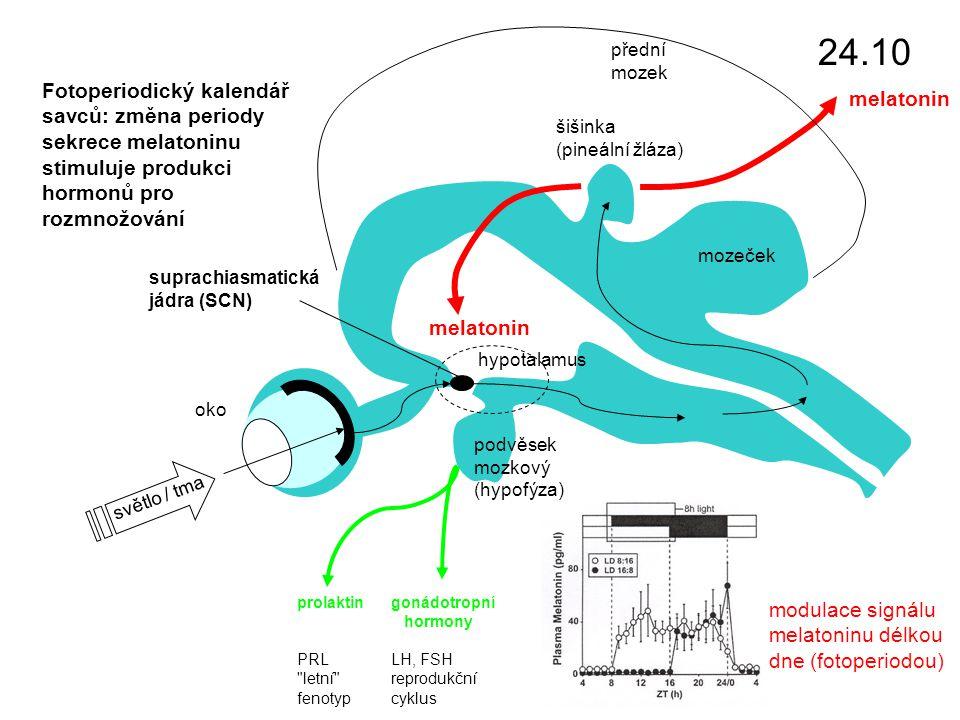 světlo / tma oko podvěsek mozkový (hypofýza) suprachiasmatická jádra (SCN) přední mozek mozeček šišinka (pineální žláza) melatonin modulace signálu melatoninu délkou dne (fotoperiodou) prolaktin PRL letní fenotyp gonádotropní hormony LH, FSH reprodukční cyklus Fotoperiodický kalendář savců: změna periody sekrece melatoninu stimuluje produkci hormonů pro rozmnožování hypotalamus 24.10