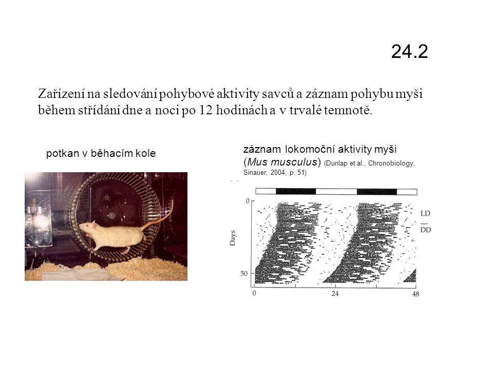 potkan v běhacím kole záznam lokomoční aktivity myši (Mus musculus) (Dunlap et al., Chronobiology, Sinauer, 2004, p.