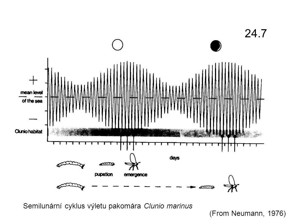 Semilunární cyklus výletu pakomára Clunio marinus (From Neumann, 1976) 24.7