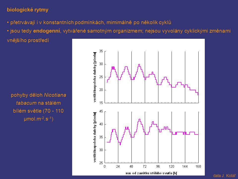 biologické rytmy přetrvávají i v konstantních podmínkách, mimimálně po několik cyklů jsou tedy endogenní, vytvářené samotným organizmem; nejsou vyvolá