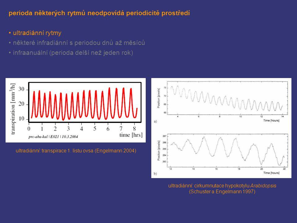 perioda některých rytmů neodpovídá periodicitě prostředí ultradiánní rytmy některé infradiánní s periodou dnů až měsíců infraanuální (perioda delší než jeden rok) ultradiánní: transpirace 1.