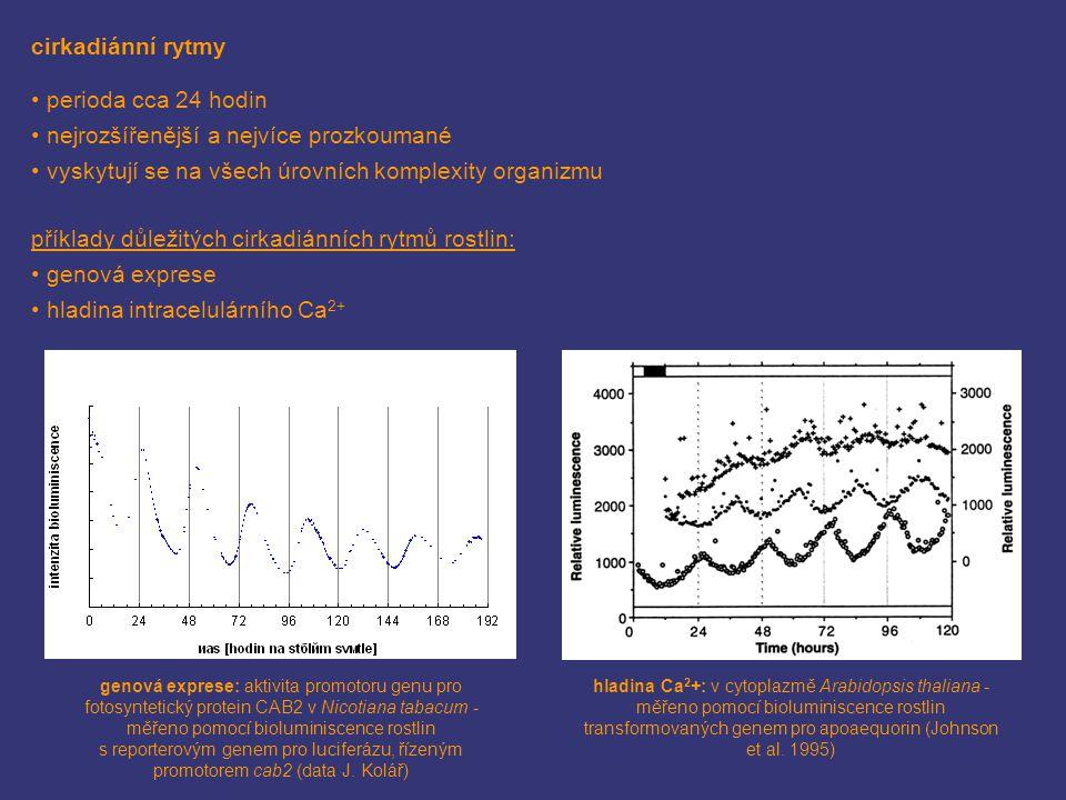 cirkadiánní rytmy perioda cca 24 hodin nejrozšířenější a nejvíce prozkoumané vyskytují se na všech úrovních komplexity organizmu příklady důležitých cirkadiánních rytmů rostlin: genová exprese hladina intracelulárního Ca 2+ genová exprese: aktivita promotoru genu pro fotosyntetický protein CAB2 v Nicotiana tabacum - měřeno pomocí bioluminiscence rostlin s reporterovým genem pro luciferázu, řízeným promotorem cab2 (data J.
