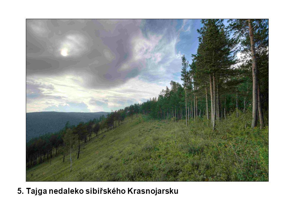 5. Tajga nedaleko sibiřského Krasnojarsku