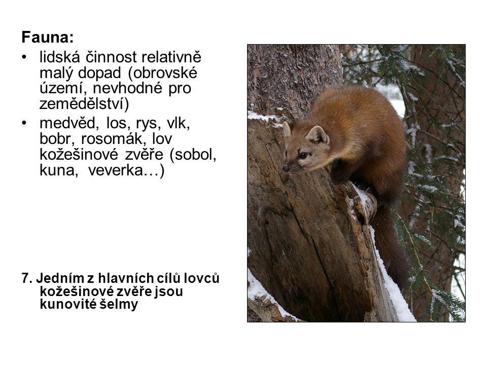 Fauna: lidská činnost relativně malý dopad (obrovské území, nevhodné pro zemědělství) medvěd, los, rys, vlk, bobr, rosomák, lov kožešinové zvěře (sobol, kuna, veverka…) 7.