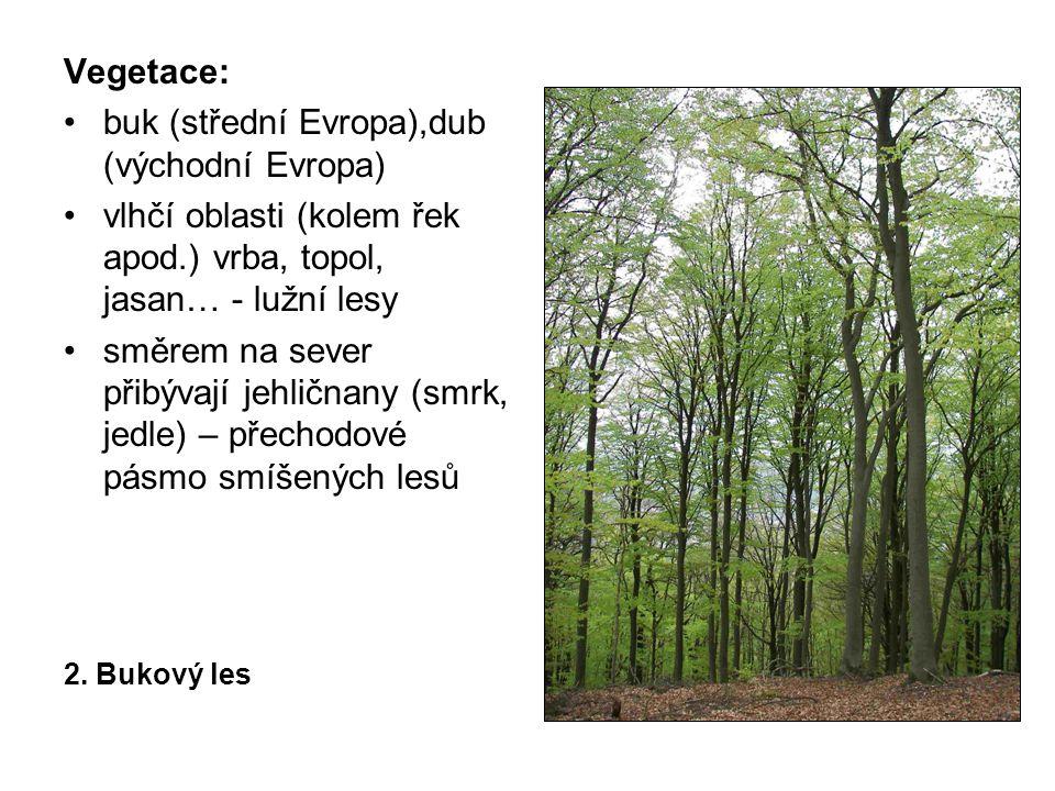 Vegetace: buk (střední Evropa),dub (východní Evropa) vlhčí oblasti (kolem řek apod.) vrba, topol, jasan… - lužní lesy směrem na sever přibývají jehličnany (smrk, jedle) – přechodové pásmo smíšených lesů 2.