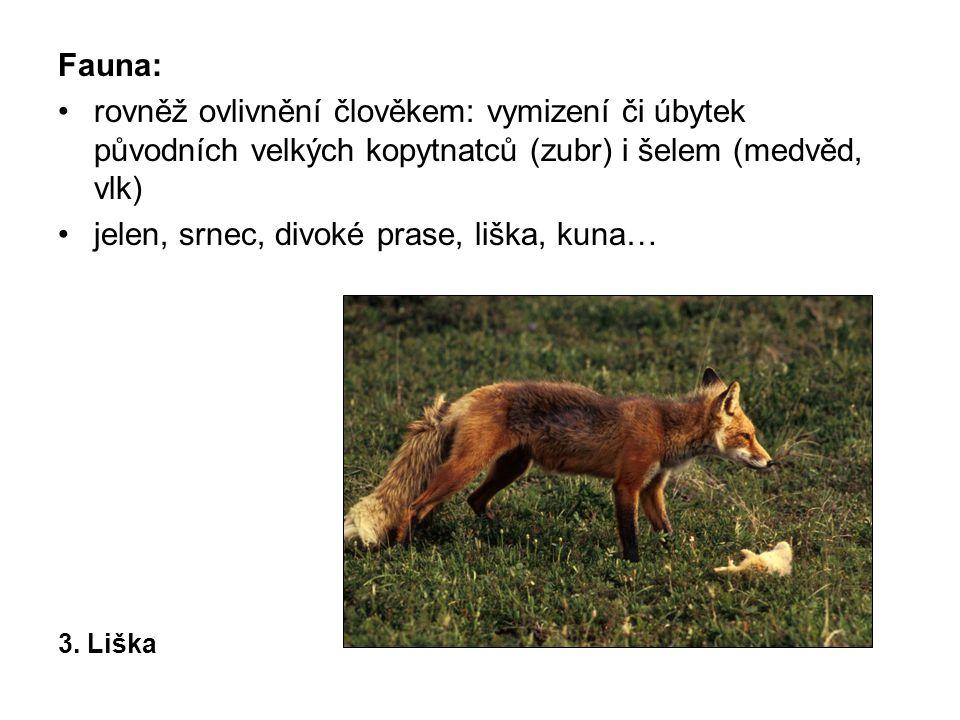 Fauna: rovněž ovlivnění člověkem: vymizení či úbytek původních velkých kopytnatců (zubr) i šelem (medvěd, vlk) jelen, srnec, divoké prase, liška, kuna… 3.