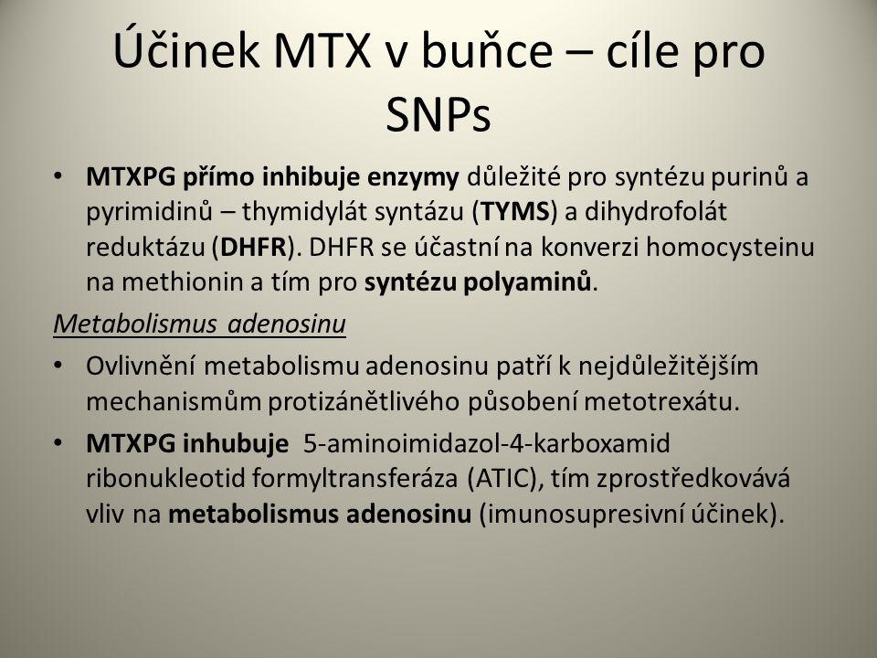 Účinek MTX v buňce – cíle pro SNPs MTXPG přímo inhibuje enzymy důležité pro syntézu purinů a pyrimidinů – thymidylát syntázu (TYMS) a dihydrofolát reduktázu (DHFR).