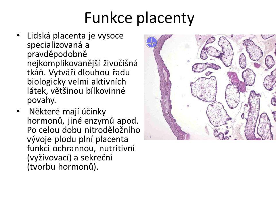 Funkce placenty Lidská placenta je vysoce specializovaná a pravděpodobně nejkomplikovanější živočišná tkáň. Vytváří dlouhou řadu biologicky velmi akti