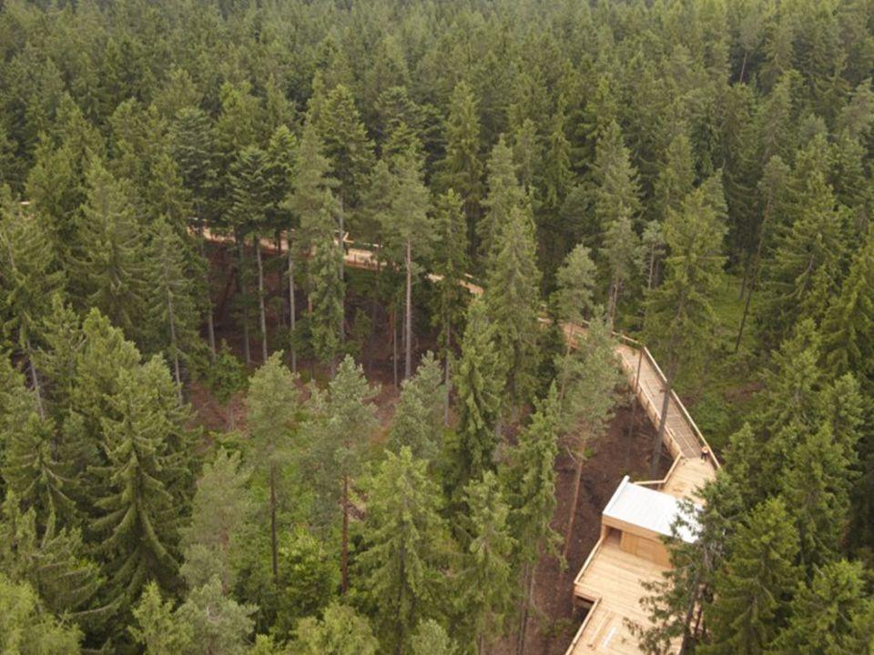 Technická data: Délka stezky - 372 metrů Délka stezky ve věži - 303 metrů Výška rozhledny - 40 metrů Výška stezky - 24 metrů Stoupání lávky - 2-6 % vč