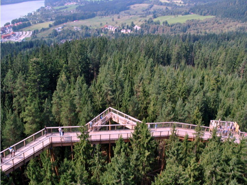 Zážitek a poznání přírody z jiné perspektivy První stezka korunami stromů v České republice nabízí návštěvníkům jedinečnou kombinaci zážitků. Stezka j