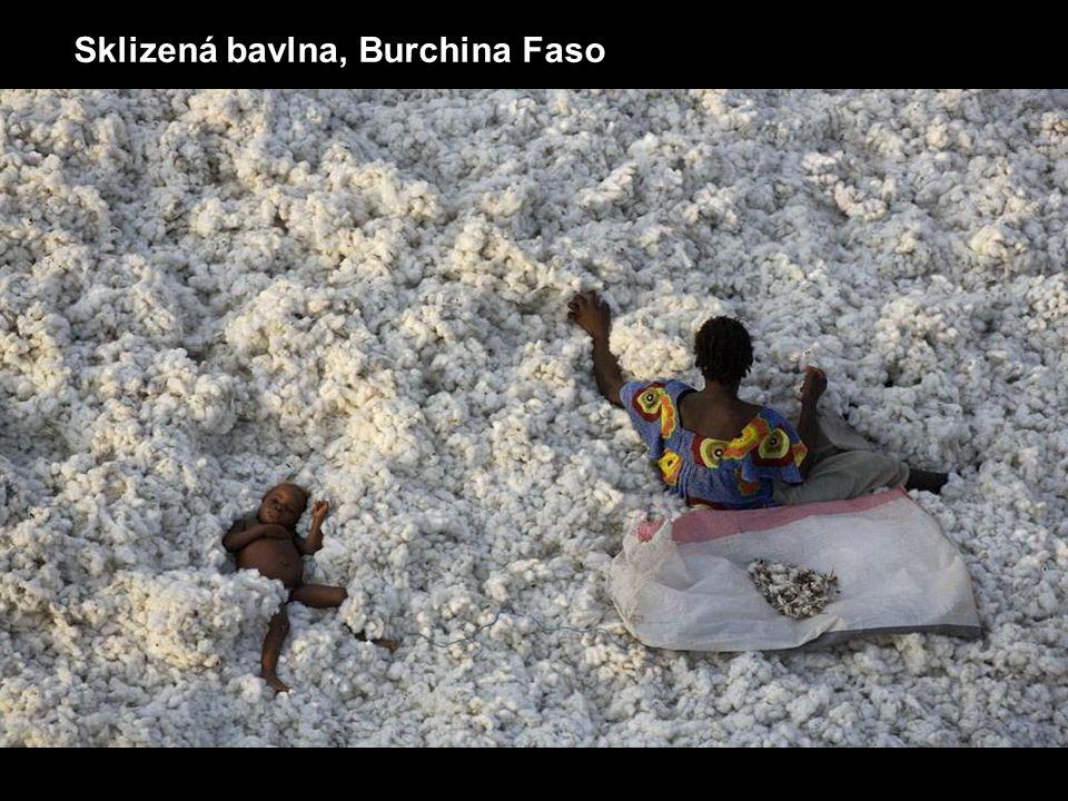 Sklizená bavlna, Burchina Faso