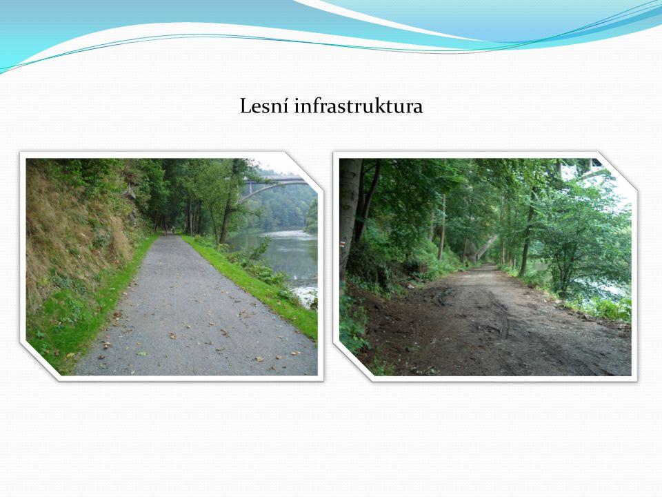Lesní infrastruktura