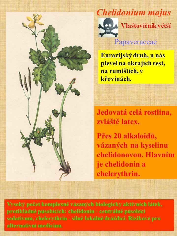 Vysoký počet komplexně vázaných biologicky aktivních látek, protikladně působících: chelidonin - centrálně působící sedativum, chelerythrin - silně lokálně dráždící.