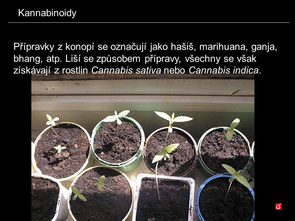 Kannabinoidy Přípravky z konopí se označují jako hašiš, marihuana, ganja, bhang, atp. Liší se způsobem přípravy, všechny se však získávají z rostlin C