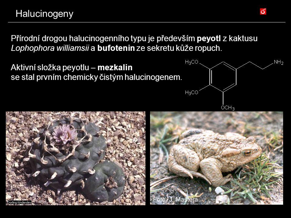 Halucinogeny Přírodní drogou halucinogenního typu je především peyotl z kaktusu Lophophora williamsii a bufotenin ze sekretu kůže ropuch. Aktivní slož