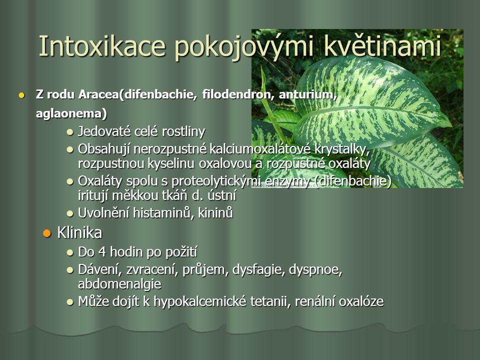 Intoxikace pokojovými květinami Z rodu Aracea(difenbachie, filodendron, anturium, aglaonema) Z rodu Aracea(difenbachie, filodendron, anturium, aglaone