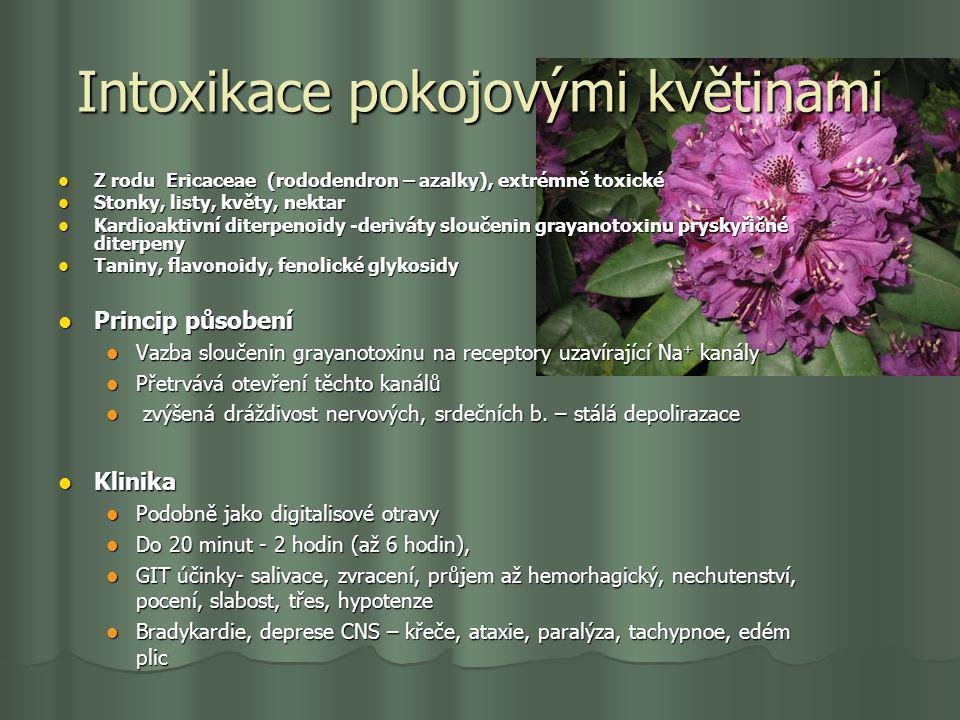 Intoxikace pokojovými květinami Z rodu Ericaceae (rododendron – azalky), extrémně toxické Z rodu Ericaceae (rododendron – azalky), extrémně toxické St
