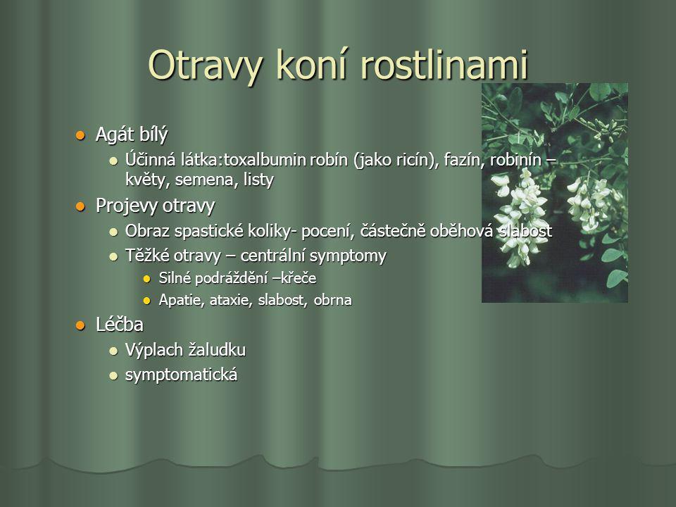 Otravy koní rostlinami Agát bílý Agát bílý Účinná látka:toxalbumin robín (jako ricín), fazín, robinín – květy, semena, listy Účinná látka:toxalbumin r