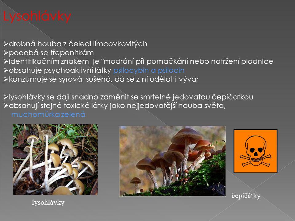 Lysohlávky  drobná houba z čeledi límcovkovitých  podobá se třepenitkám  identifikačním znakem je modrání při pomačkání nebo natržení plodnice  obsahuje psychoaktivní látky psilocybin a psilocin  konzumuje se syrová, sušená, dá se z ní udělat i vývar  lysohlávky se dají snadno zaměnit se smrtelně jedovatou čepičatkou  obsahují stejné toxické látky jako nejjedovatější houba světa, muchomůrka zelená čepičátky lysohlávky